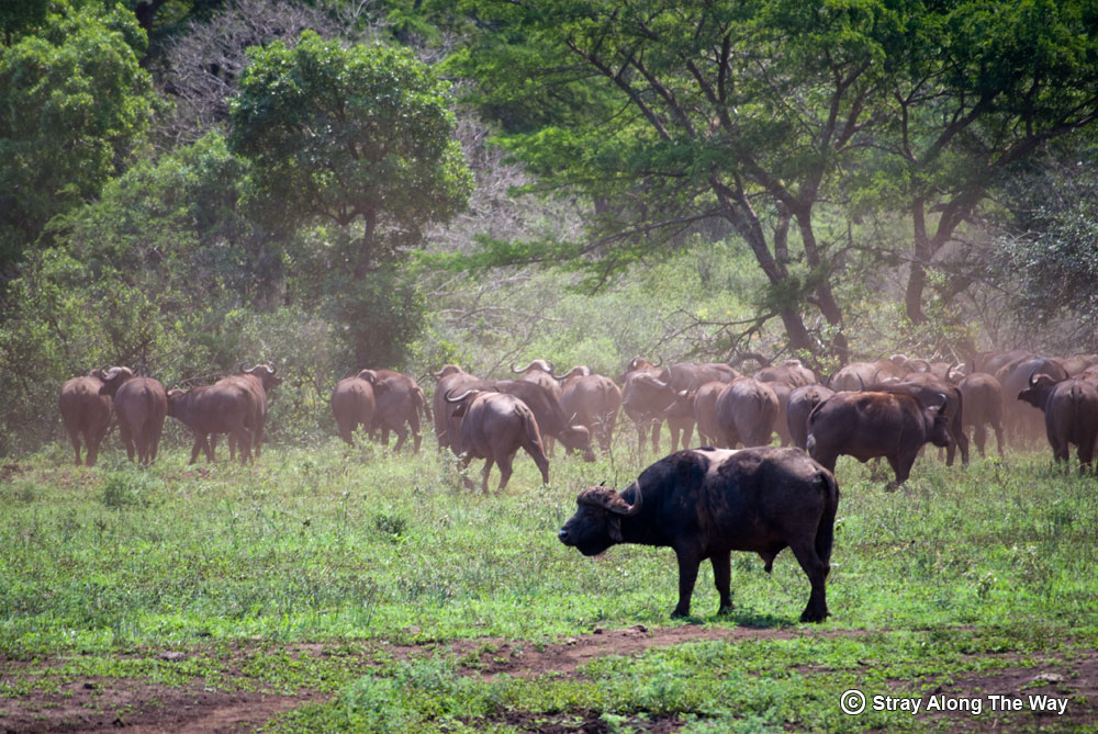 5 unforgettable game reserves in KZN- Stray Along The Way